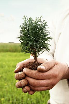 环境保护,田地,符号,盆景,刺柏属丛木,捧着,盆栽,垂直画幅,天空,泥土