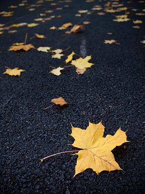 叶子,自然,垂直画幅,沥青,枝繁叶茂,枫叶,秋天,无人,黑色,背景