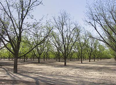 美洲山核桃,小树林,山核桃树,自然,饮食,成一排,水平画幅,无人,林间空地,户外