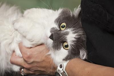 猫,白色,自然美,水平画幅,技术员,猫科动物,健康保健,动物身体部位,兽医