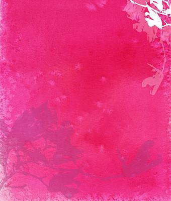 晚樱科,粉色背景,热,玉兰类,垂直画幅,无人,色彩鲜艳,抽象,玫瑰,品红色