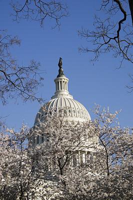 樱桃树,华盛顿特区,亚洲樱桃树,联邦大楼,垂直画幅,纪念碑,天空,留白,樱桃,北美