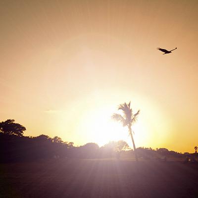 沼泽地国家公园,自然,美国,橙色,地形,鸟类,黄昏,户外,方形画幅,棕榈树