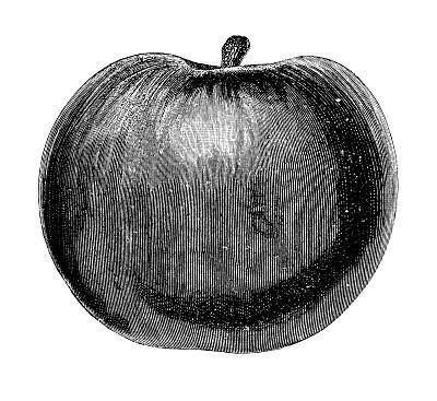 绘画插图,菜园,水果,苹果,水平画幅,素食,无人,生食,法式食品,甜点心