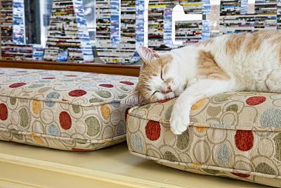 疲劳的,猫,窗座,座位,水平画幅,无人,爪子,动物身体部位,前景聚焦,动物主题