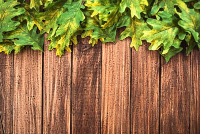 叶子,绿色,秋天,背景,留白,褐色,边框,水平画幅,纹理效果,枝繁叶茂