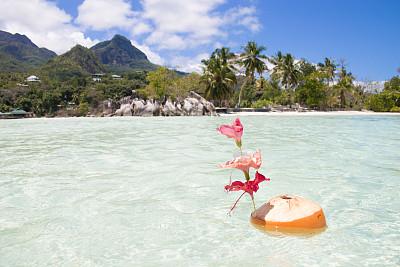 椰子,塞舌尔,马埃,水,天空,留白,水平画幅,山,无人,椰子树