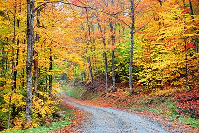 佛蒙特,路,风景,水平画幅,枝繁叶茂,无人,户外,乡村风格,四季,十月