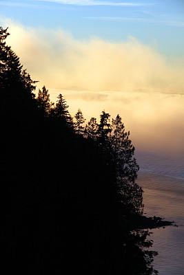 雾,悬崖,英湾,史坦利公园,海岬,温哥华,雪松,热霾,垂直画幅,水