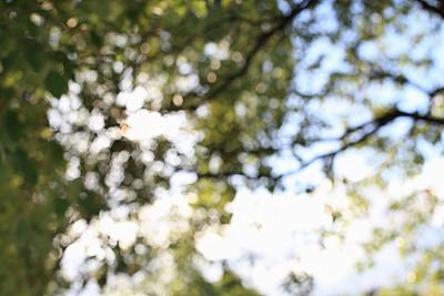 自然,抽象,天空,草原,水平画幅,形状,枝繁叶茂,无人,早晨,夏天