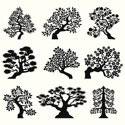 盆景,柠檬花,柠檬树,叶状图案,树梢,绘画插图,夏天,仅一朵花,想法,园艺展览
