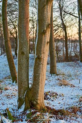 冬天,雾淞,垂直画幅,雪,无人,夏天,户外,草,反差