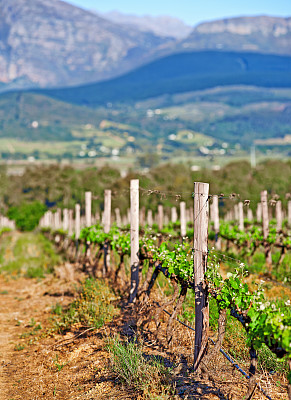 酒瓶,住房,南非文明,斯泰伦博斯,垂直画幅,葡萄酒,水,天空,留白,草坪