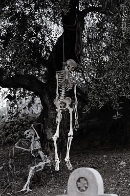 人类骨架,垂直画幅,正面视角,留白,人造的,形状,无人,科学,塑胶,怪异