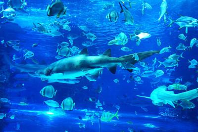 水族馆,大于号,鲨鱼,鱼缸,自然,水平画幅,无人,水下,海洋生命,户外
