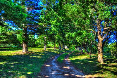 路,艾塞门加利索湿地公园,夸祖鲁-纳塔耳,水平画幅,绿色,无人,户外,房屋,针叶树,农舍