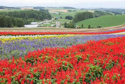 田地,美瑛町,自然,成一排,水平画幅,地形,景观设计,富良野盆地,无人,日本