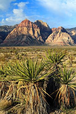 早晨,野生动物保护区,红岩石,国内著名景点,约书亚树,丝兰,莫哈韦沙漠,自然,垂直画幅,宁静