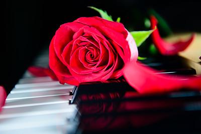 热情,音乐,电钢琴,弹唱小乐曲,琴弦,钢琴键,古典乐,仅一朵花,想法,花束