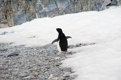 阿黛利企鹅,雪,南极群岛,筑巢处,水平画幅,无人,鸟类,企鹅,动物身体部位,野外动物