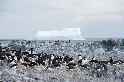 冰山,南极群岛,阿黛利企鹅,南冰洋,水,天空,水平画幅,无人,鸟类,企鹅