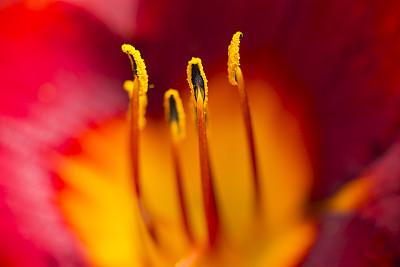 两只动物,巨大的,风,萱草,选择对焦,水平画幅,无人,户外,特写,仅一朵花