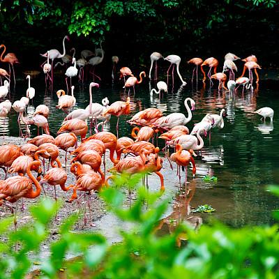 火烈鸟,动物群,大群动物,热带鸟,水,美,留白,公园,无人,美人