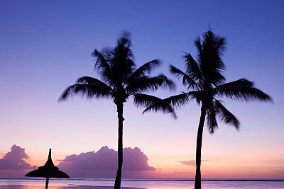 岛,鸡尾酒,毛里求斯,水,天空,留白,风,曙暮光,夏天,棕榈树