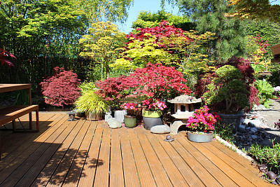 日光,图像,枫树,家庭花园,室外地板,日本,日本灯笼,有凹槽的,野餐桌,长椅