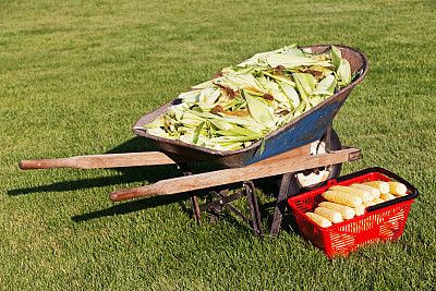甜玉米,外壳,篮子,独轮手推车,充满的,购物篮,老玉米,明尼苏达,垃圾,水平画幅