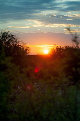 博茨瓦纳,黎明,喀拉哈里沙漠,卡格拉格帝边境公园,多刺疏林,垂直画幅,天空,留白,沙子,无人