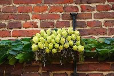 砖墙,玫瑰,华丽的,铁,月桂树,铁艺,中等数量物体,温带的花,水平画幅,无人