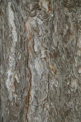 树皮,胡桃树,美洲山核桃,橡树林地,自然,垂直画幅,褐色,式样,松树,纹理效果