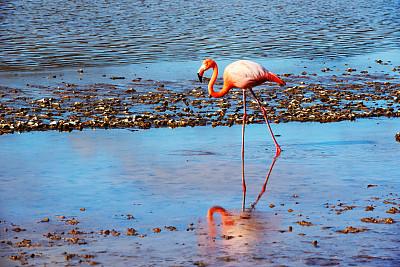加拉帕戈斯群岛,火烈鸟,粉色,岛,圣玛丽亚岛,盐湖,留白,国家公园,水平画幅,无人