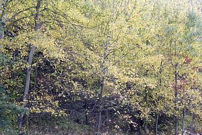 秋天,褐色,水平画幅,无人,户外,树林,美国中西部地区,十月,彩色图片,叶子