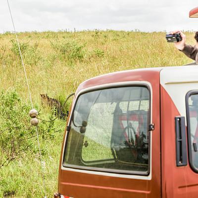 美洲豹,汽车,非洲豹,马赛人,越野吉普,四驱车,家用摄像机,陆用车,草原,旅行者