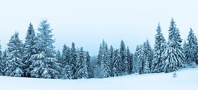 雪,冬天,地形,云杉,森林,有包装的,天空,气候,白色,松科