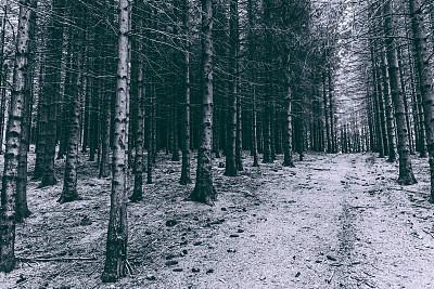 秘密,怪异,树林,黑森林,留白,水平画幅,无人,2015年,欧洲,黑白图片