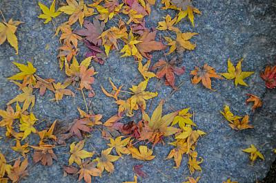 秋天,日本,小路,叶子,石头,日本茶道公园,星和园,叶脉,神殿,留白