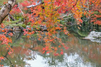 秋天,日本,京都府,叶子,日本茶道公园,星和园,叶脉,神殿,留白,枝繁叶茂