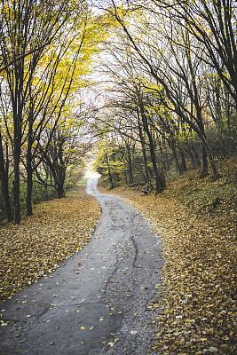 秋天,路,垂直画幅,公园,无人,早晨,夏天,户外,四季,树林
