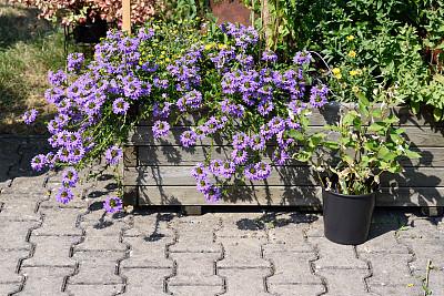 花盆,沥青,水平画幅,绿色,无人,紫色,2015年,花朵,花瓣,花