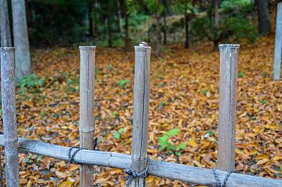 秋天,日本,京都府,叶子,自然美,日本茶道公园,星和园,神殿,留白,枝繁叶茂