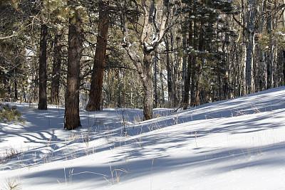 洛矶山脉,穿雪鞋走路运动,小路,科罗拉多河,派克山峰国家森林,国家森林公园,留白,公园,水平画幅,雪