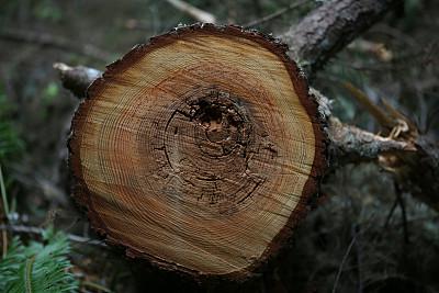 大不列颠哥伦比亚,加拿大,纳奈莫,扫雪车,年轮,自然,水平画幅,无人,户外,植物表皮