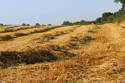 稻草,农作物,田地,农场,日光,早晨,清新,天空,水平画幅,户外