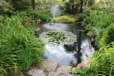 水景花园,水,睡莲,喷泉,图像,紫色云兰,萱草,刺柏属丛木,自来水,鸡爪枫
