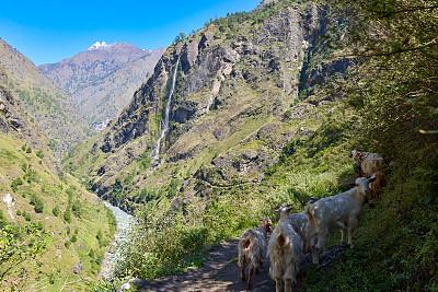 珠穆朗玛峰,尼泊尔,电路板,戈焦湖,普莫里峰,戈焦山谷,夏尔巴人,努子峰,阿马达布朗峰,冰瀑