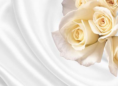 玫瑰,白色,丝绸,背景,玫瑰花瓣,美,贺卡,灵感,水平画幅,形状