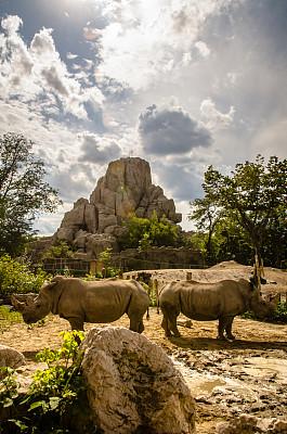 犀牛,一对,垂直画幅,天空,岩石,无人,非洲,两只动物,野外动物,夏天